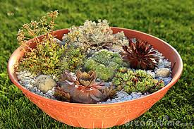 Small Rock Garden Images Small Rock Garden Designs Pdf