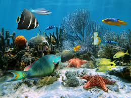 Photo Mural Wallpaper by Coral Reef Wallpaper Wall Mural Wallsauce
