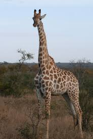 african safari animals what to wear on an african safari usa today