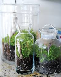 Bathroom Apothecary Jar Ideas Colors 37 Best Home Apothecary Images On Pinterest Glass Jars
