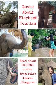 25 best ideas about about elephant on pinterest elephant