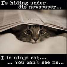 Newspaper Cat Meme - 45 best ninja cats images on pinterest kitty cats funny animal