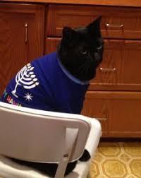 cat menorah hannukkah kittehz the