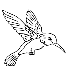 special hummingbird coloring pages for kids bo 7236 unknown