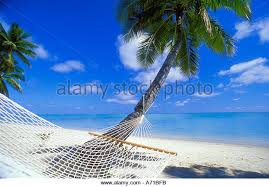 palm tree beach hammock stock photos u0026 palm tree beach hammock
