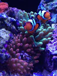 hawaii joe u0027s elos 100 build reef2reef saltwater and reef