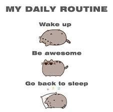lynda yorke on twitter susancheriebeam motivational cat meme
