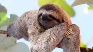 Sloth Whisper Meme - whisper sloth tumblr