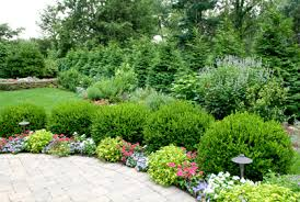 Evergreen Landscaping Ideas Landscaping With Shrubs And Bushes Pictures And Easy Design Ideas