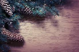 photos new year nature branches pine cone template greeting card