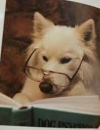 american eskimo dog meme pol serious question what does the left actually hope