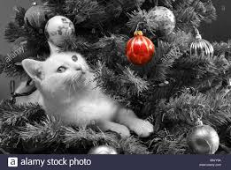 black and white photo of a white cat in a decorated christmas tree