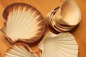 where to buy seashells sea shell candles how to make crafts a la mode