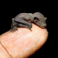 As Blind As A Bat Meaning Dream Interpretation Bats