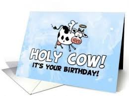 cow greeting cards 9 best cow cards images on birthday cards cow