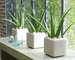 dormir avec une plante dans la chambre peut dormir avec plante verte sa chambre on en la top open inform info