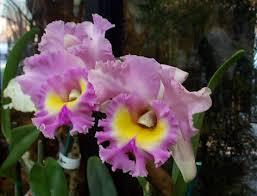 indoor plants exotic plants