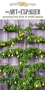 best 25 espalier fruit trees ideas on fruit trees