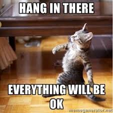 Hang In There Meme - 15 best hang in there images on pinterest fluffy pets funny