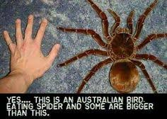 Huge Spider Memes Image Memes - things that make us say nope memes humour and funny things