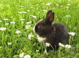 rabbits u0026 guinea pigs topflite ltd