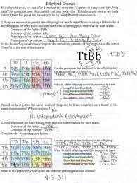 Dihybrid Crosses Worksheet Popular Punnett Square Dihybrid Cross Worksheet Free To Print Pdf