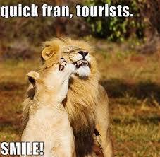 Lion Meme - quick fran tourists lion meme