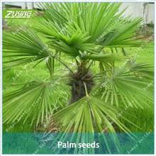 ornamental trees shopping the world largest