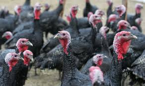 it s turkey time reserve a fresh bird now in time for