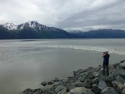 Anchorage Tide Table Beluga Whales At Beluga Point Review Of Bore Tide In Turnagain