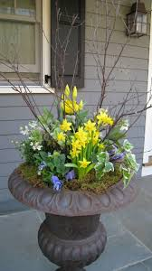 best 25 large outdoor planters ideas on pinterest large plant