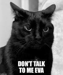 Don T Talk To Me Meme - grumpy cat meme imgflip