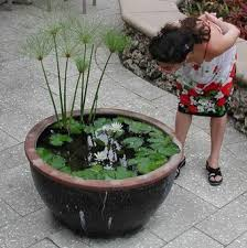 Building A Fish Pond In Your Backyard by Build A Container Water Garden To Cure Your Pond Cravings