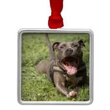 blue nose pit bull ornaments keepsake ornaments zazzle