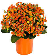 Flowers For Men - shop flowers for men gifts for men fromyouflowers com