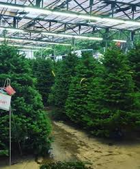where to find christmas trees and decorations in singapore