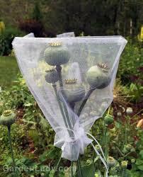 used wedding supplies gardenlady gardener vs chipmunk