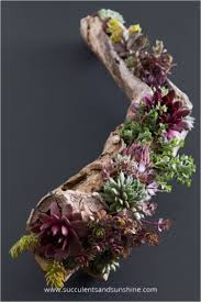 diy u0027s for turning succulent plants into wonderful decor pieces