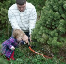 piney acres christmas tree farm is a beautiful family adventure