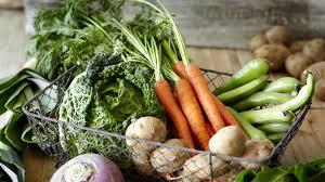 indoor vegetable gardening for beginners home outdoor decoration