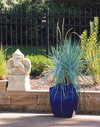 of best ornamental grasses for growing in containers 5