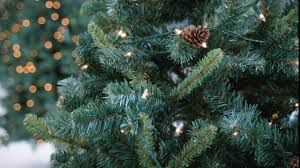 here u0027s how to get christmas tree permits for kaibab and tonto