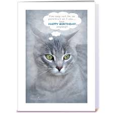 happy birthday for cat greeting card by olga s layers