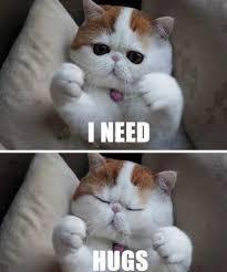 Cat Memes Tumblr - cute cat memes tumblr image memes at relatably com