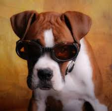 boxer dog shows 2016 boxer dog names male and female breed specific