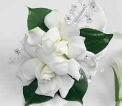 white corsages for prom prom corsages boutonnieres delivery baraboo wi apples llc