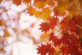 why do leaves change color in the fall sciencedaily