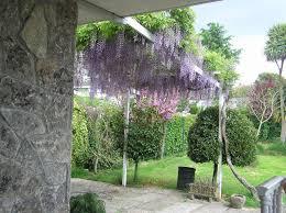 enredaderas o trepadoras para cubrir pared en jardin terrazas y