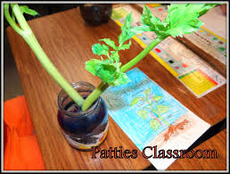 patties classroom jack and the beanstalk terrariums and plants