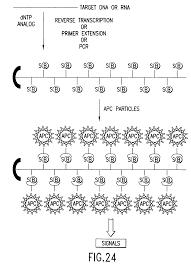 Patent Us7470511 Methods For Determining Nucleic Acid